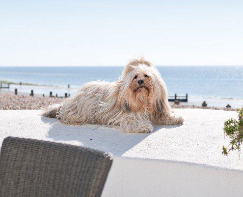 AOSBH dog
