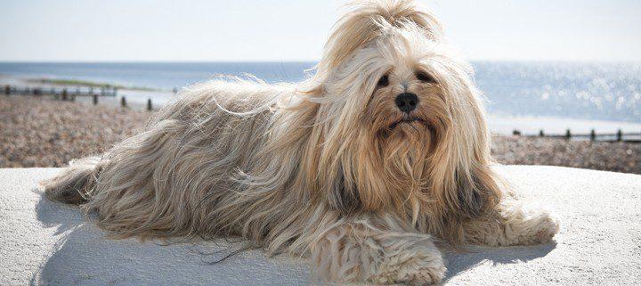 pet friendly rentals in West Sussex